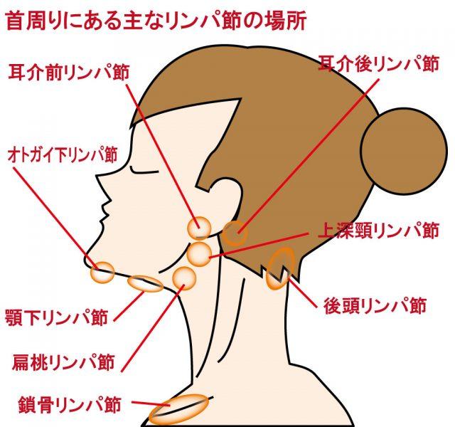 こんなにもある!首の周りにあるリンパ節