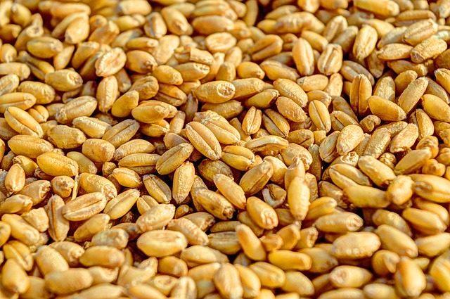 2週間で3㎏減も可!もち麦ダイエット実践6ステップ