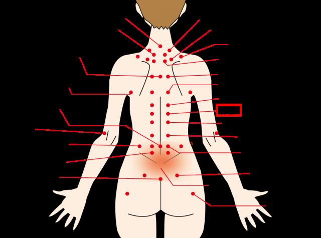 肝臓のコンディションを整える背中のツボ